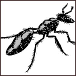 シロアリの天敵と意外な活用法