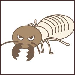 シロアリの種類と役割